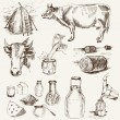 Stock Vector: Cow and milk products