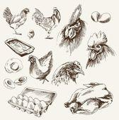 种鸡繁育 — 图库矢量图片
