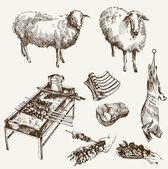 Sheep breeding — Stock Vector