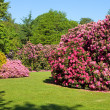 Rhododendron and Azalea Bushes in Beautiful Summer Garden — Foto Stock
