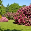Rhododendron and Azalea Bushes in Beautiful Summer Garden — Stok fotoğraf