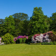 Rhododendron Azalea Bushes and Trees in Beautiful Summer Garden — Stock Photo