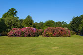 Rhododenron Flower Bushes and Trees in a Sunny Garden — Stock Photo