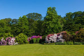 Rhododendron Azalea Bushes and Trees in Beautiful Summer Garden — ストック写真