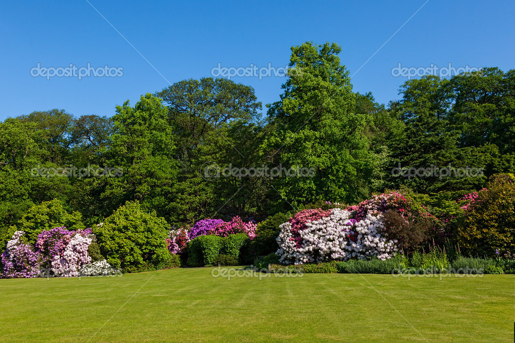 Rhododendron Azalea Bushes and Trees in Beautiful Summer Garden in the Sunshine — Lizenzfreies Foto #11011289