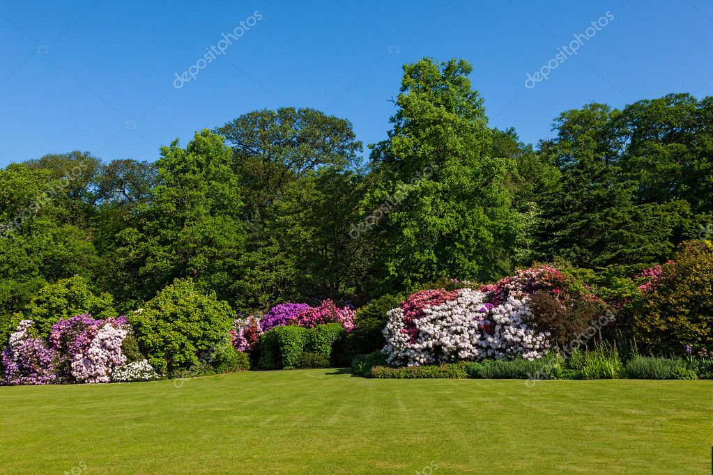 Rhododendron Azalea Bushes and Trees in Beautiful Summer Garden in the Sunshine — Stock Photo #11011289