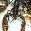 Stock Photo: Lobster for sale