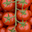 Tomato on the vine — Stock Photo