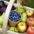 Trug of summer fruit - Stock Photo