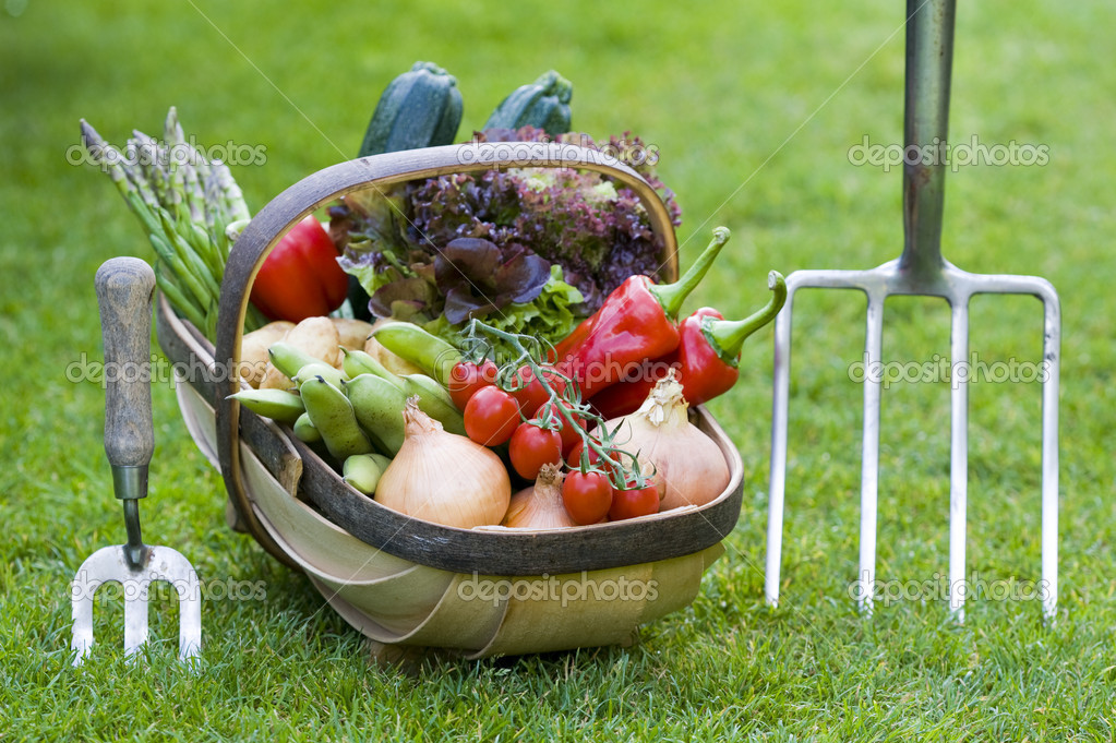 Freshly harvested home grown vegetables in a wooden trug — Stock Photo #11993862