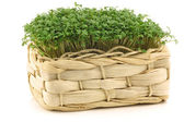 Fresh watercress in a woven basket — Stock Photo