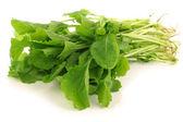 Fresh turnip tops (turnip greens) — Stock Photo