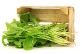 Fresh turnip tops (turnip greens) in a wooden crate — Stock Photo