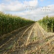 Partly harvested cornfield with power lines — Stock Photo