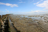 Low tide at the borders of the Wadden sea — Stock Photo