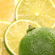 Lemon and lime fruit — 图库照片