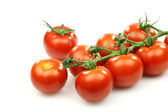 A bunch of fresh red tomatoes on the vine — Stock Photo