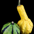 Stock Photo: A yellow and a green striped ornamental pumpkin