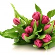 Pink tulips — Stock Photo #11910964