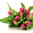 Royalty-Free Stock Photo: Pink tulips