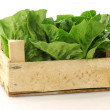 "Fresh ""little gem"" lettuce in a wooden crate — Stock Photo #11911964"
