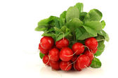 Bunch of fresh radishes — Stockfoto
