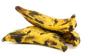 Plantain (baking) bananas — Stock Photo