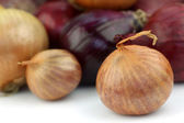 Red and brown onions — Foto Stock