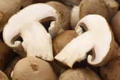 Background of a bunch of fresh champignon mushrooms — Stock Photo