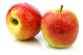 "Fresh new apple cultivar called ""Pink Lady"" — Stock Photo"