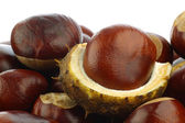 Freshly fallen chestnuts(Aesculus hippocastanum — Stock Photo