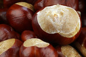 Freshly fallen chestnuts(Aesculus hippocastanum) — Stock Photo