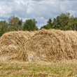 Hayfield and haystack — Stock Photo #12070144