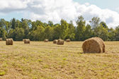 Hayfield and haystack — Stock Photo