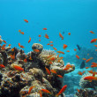 Coral reef with exotic fishes — Stockfoto