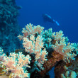 Coral reef with diver — Stockfoto