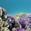 Colorful coral reef — Stockfoto