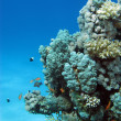 Coral reef with hard corals — Stok fotoğraf