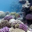 Coral reef on the bottom of sea — Stok fotoğraf