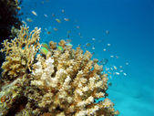 Coral reef on the bottom of sea — Stock Photo