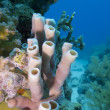 Coral reef with sea sponge — Stock Photo #12106748