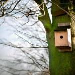 Bird house on a tree — Stock Photo #11429283