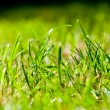 Green Summer grass - macro — Stock Photo