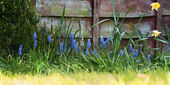 Garden and Fence in spring — Stock fotografie