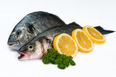 Seafood Fresh fish - Isolated in white — Stock Photo