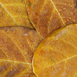 Background from autumn leaves after rain. — Stock Photo