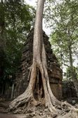 Ta Prohm — Stock Photo