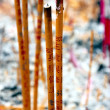 Stock Photo: Incense Sticks