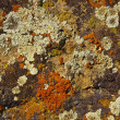 Lichen covered on rock - Stock Photo