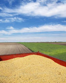 Soybean harvest++ — Stock Photo